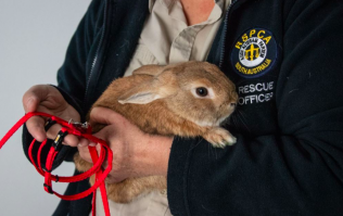 An airport had to be evacuated after a pet rabbit caused a bomb scare