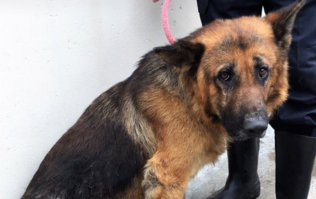 After months of neglect, DSPCA ask for help getting Ivy and Duke back to health