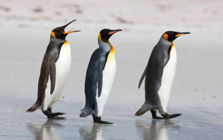 Some penguins are in a more loving relationship than you and here's the proof