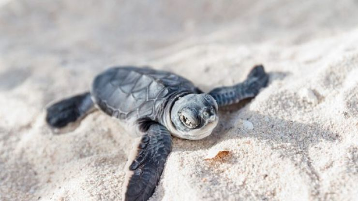 A hotel in the Maldives is looking for someone to mind its turtles