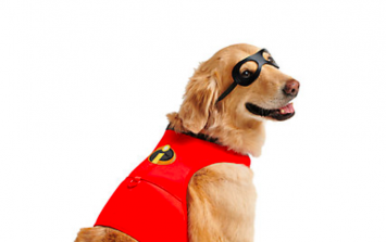 You can now get an Incredibles 2 costume for your doggo and yep, I'm deceased