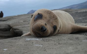 I will never forget my trip to the Galapagos...this is why you need to visit too