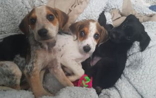 A total of 16 puppies have been rescued from 'appalling conditions' in Galway