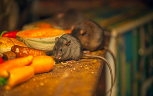 'Live rat' and 'many flies' among reasons for 13 food business closure orders last month