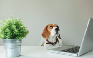 9 very small animals that'd be absolutely perfect as an office pet