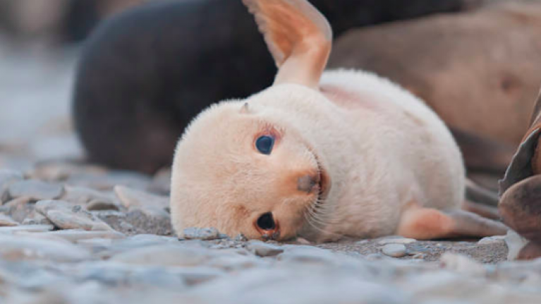 21 pictures of baby seals that will make you forget all about the futility of existence