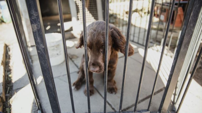 Vets want to combat puppy farms in Ireland through 'puppy contracts'