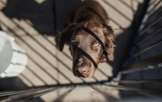 'Alarming' number of people wanting to give up dogs after Christmas says Dogs Trust
