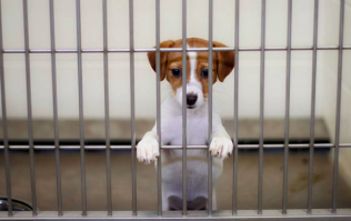 Puppy and kitten farming to be banned in the UK
