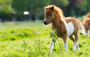 Foal successfully rescued from canal by Dublin Fire Brigade and volunteers