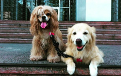 This blind doggo has her own guide dog, and kindly pass the tissues please