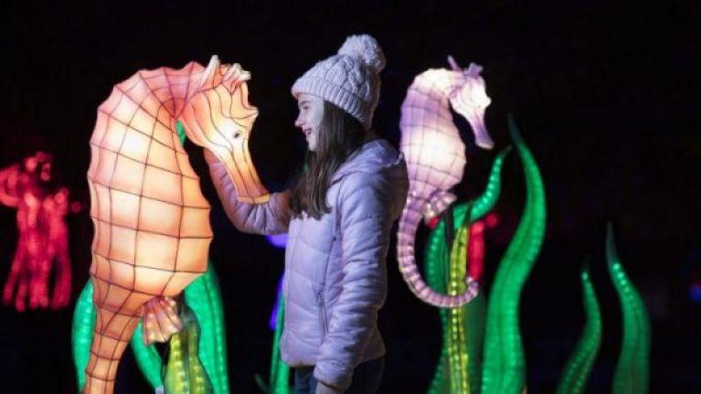 Wild Lights in Dublin Zoo will not go ahead tonight due to Met Eireann warning
