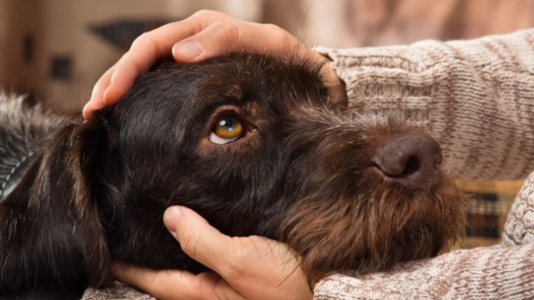 Fantastic news because petting a dog can lower your blood pressure