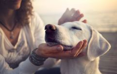 Science says that dog owners are happier than cat owners, and yeah, makes sense