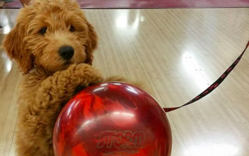 This puppy knows how to bowl and it may just be the cutest thing ever
