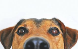 Turns out, dogs obey women more than they do men... but why?