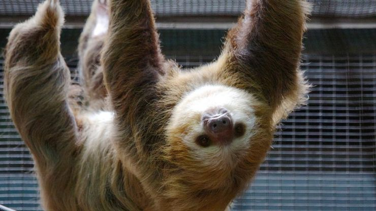 You can actually stay in the rainforest in Costa Rica among the sloths, and wow