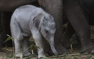 There's a new elephant calf at Dublin Zoo and he's ADORABLE