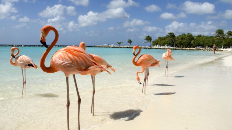 This hotel in the Bahamas has the dream job for anyone who loves flamingos