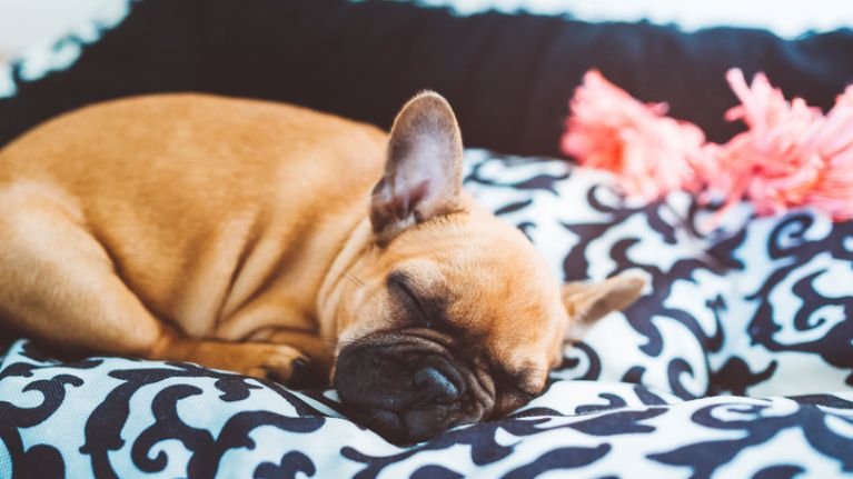 This is what our dogs dream about and it's the cutest thing you'll read today