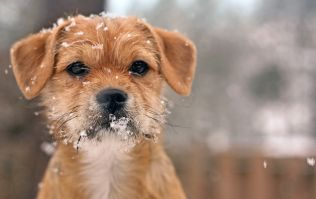 The ISPCA shares advice about keeping your animals safe during the storm