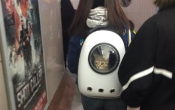Calling all cat lovers! This 'cat backpack' has to be seen to be believed