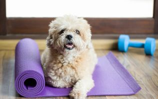 Dog Yoga is the brand new fitness trend that we just HAVE to try