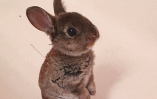 A rabbit desperately tried to jump in the bath to be with its owner and it was so beautiful