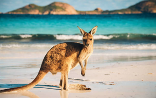Tell us your nominee for the Aussie Blog Awards and WIN a trip to Aus!