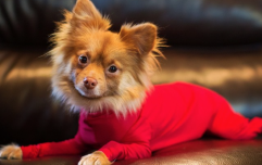 Dog leotards are here - and could actually be very good for your pooch