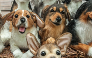 You can now get a teddy bear made that looks EXACTLY like your dog