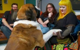 Everyone had the same reaction to this absolutely spectacular dog on Gogglebox