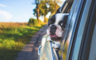 One in four of us don't restrain our pets in the car, survey finds