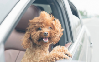 A science study says dogs aren't all that great... and we absolutely disagree