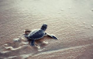 123 baby turtles have reportedly been stolen from the Galapagos Islands