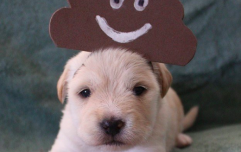 This farm made Halloween costumes for puppies and trust us, it's worth the scroll