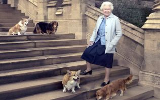 You honestly won't believe the royal treatment that the Queen's corgis receive