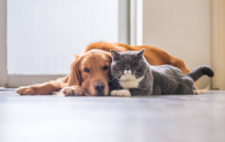 Dogs are now officially more affectionate than cats, according to this research
