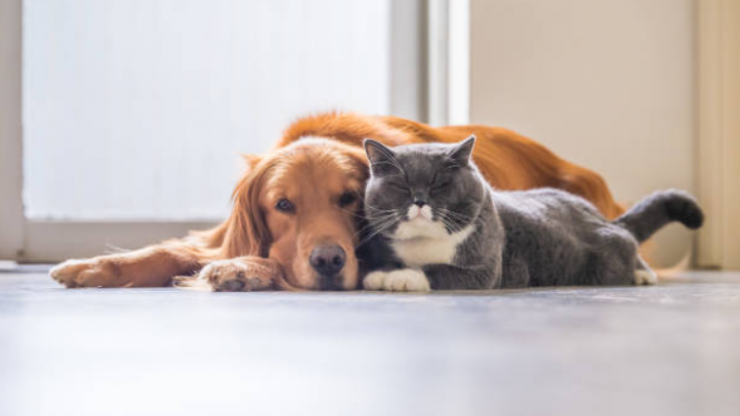 Dogs are now officially more affectionate than cats, according to research