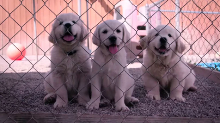 Netflix is releasing a docu-series about dogs and CHRIST the trailer is heartwarming
