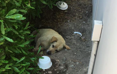 Lonely dog found living in the dirt for months after his family moved away and left him