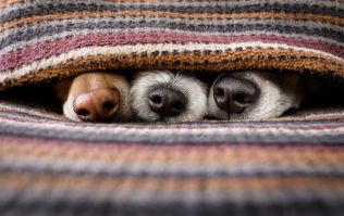 Calling all animal lovers, there's a pet expo coming to Dublin this weekend