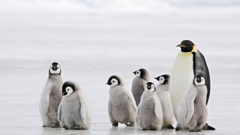 David Attenborough's crew saved baby penguins when filming latest doc