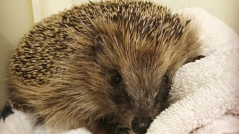 Queen guitarist Brian May rescued an injured hedgehog and documented it on Instagram