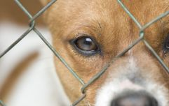 Dogs Trust will stop pup adoptions over the Christmas period