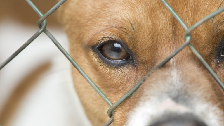 Dog Action Welfare Group forced to 'close its doors until further notice'