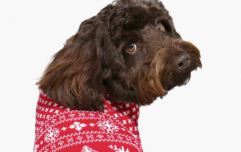 Boohoo is selling MATCHING dog and human Christmas jumpers