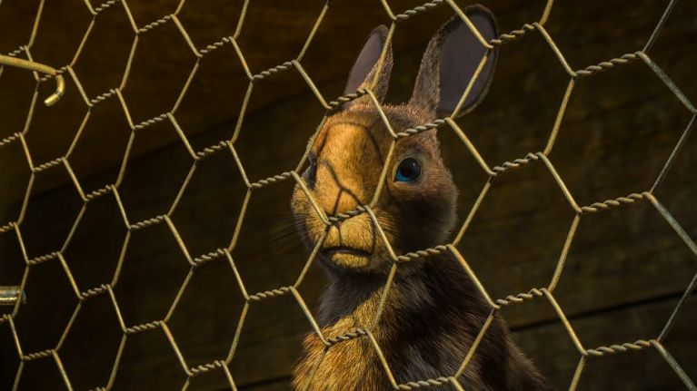 The official trailer for the Watership Down remake is here and tissues, anyone?