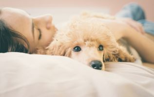 According to science, it's better to sleep next to a dog than a man