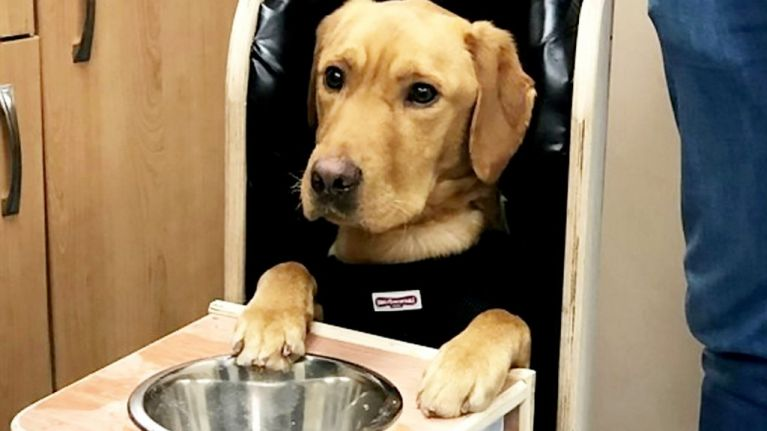 This adorable doggo has his own special chair because of a rare medical condition